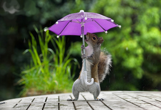 max-ellis-umbrella-squirrel-1600x1065
